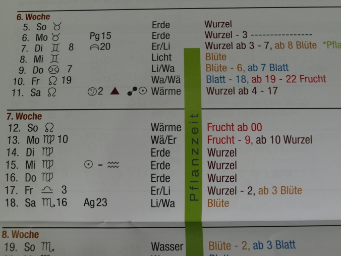 Paprika Aussaaat 2017 2 (16).JPG